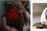 Batu Akik Sarang Tawon Teratai Hitam