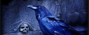 Suara Burung di Malam Hari