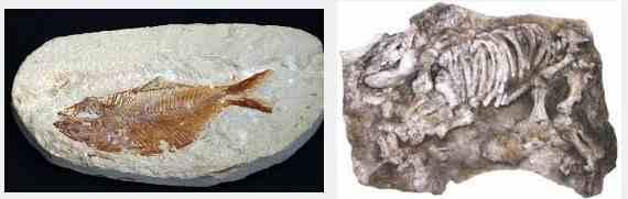 Batuan Fosil