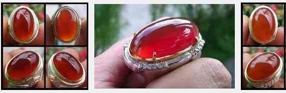 Cara Merawat Red Raflesia Bengkulu