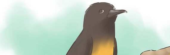 Gambar Ilustrasi Mimpi Menangkap Burung Via Wikihow.com