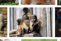 Arti Mimpi Berkelahi Dengan Monyet