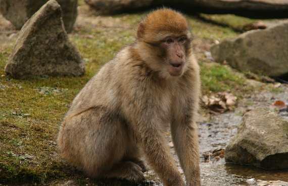 Arti Mimpi Digigt Monyet Menurut Primbon