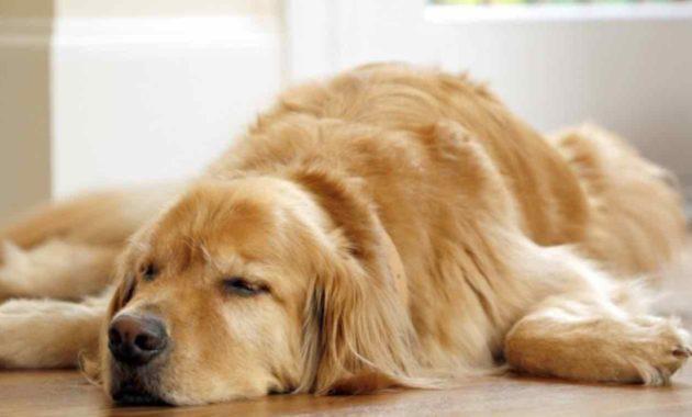 Arti Mimpi Anjing Masuk Rumah