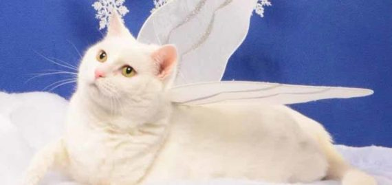 Arti Mimpi Melihat Kucing Mati
