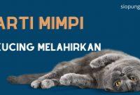 Arti Mimpi Melihat Kucing Melahirkan