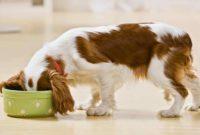 Arti Mimpi Memberi Makan Anjing