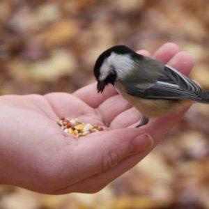 Arti Mimpi Memberi Makan Burung