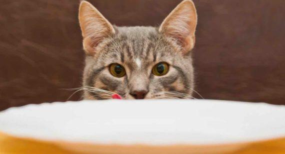 Arti Mimpi Memberi Makan Kucing