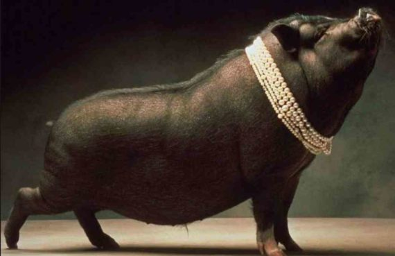 Babi Ngepet Adalah Makhluk Mitologi Indonesia Yang Dipercaya Masih Eksis