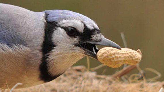 Burung Sedang Makan