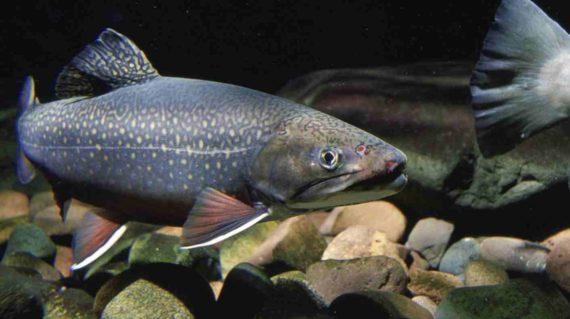 Digigit Ikan Lele