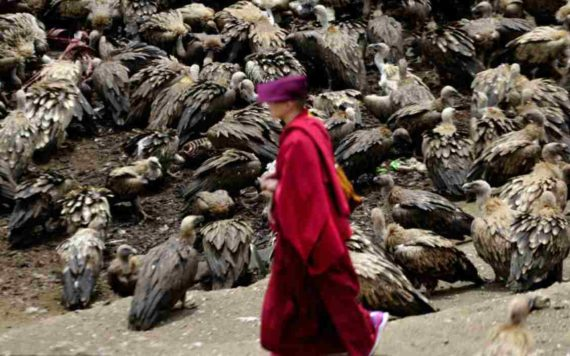 Exposing Dead to Vultures