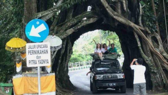 Keangkeran Pohon Bunut Bolong