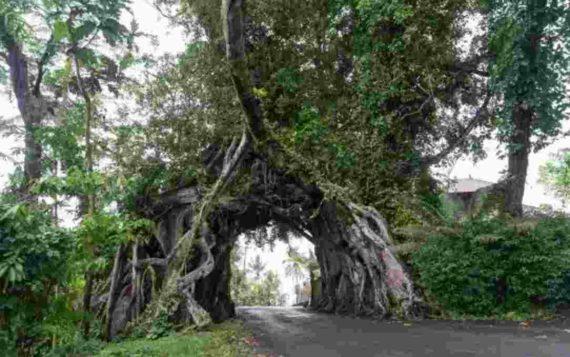Kisah Mistis Pohon Bunut Bolong