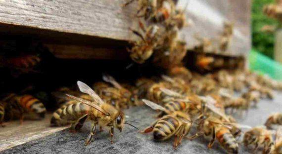 Kumpulan Lebah