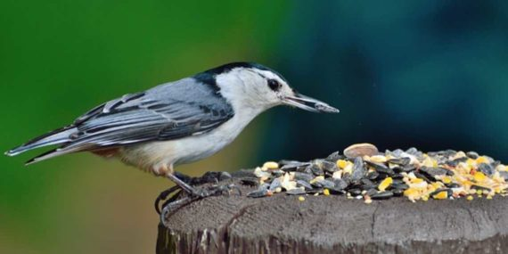 Memberikan Burung Makan