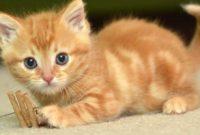 Mimpi Anak Kucing
