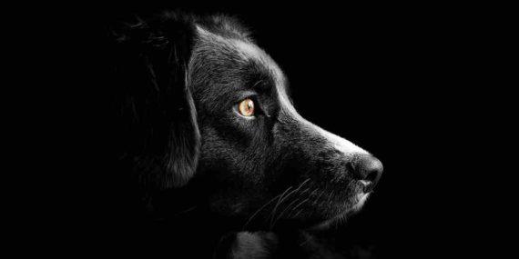 Mimpi Digigit Anjing