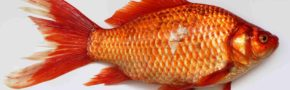 10 Arti Mimpi Digigit Ikan Menurut Psikolog & Primbon