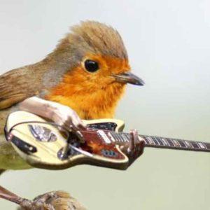 Arti Mimpi Dikejar Burung