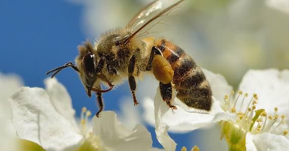 Mimpi Dikejar Lebah