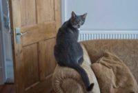 Mimpi Kucing Masuk Rumah