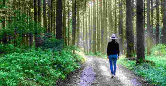 Mimpi Tersesat di Hutan