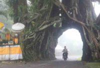 Pohon Bunut Bolong