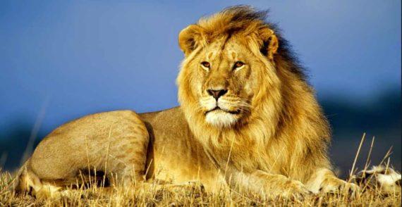 Singa Menurut Primbon