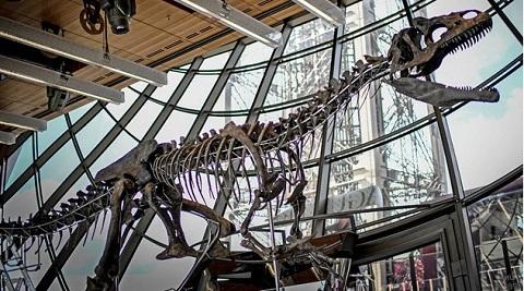 Lelang Kerangka Dinosaurus Pemakan Daging
