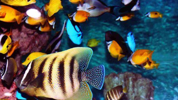 Digigit Ikan