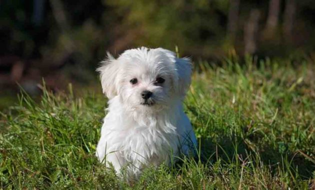 Bermimpi Dikejar Anjing Putih