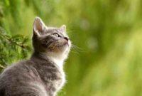 Mimpi Digigit Kucing