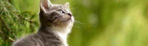 10 Arti Mimpi Digigit Kucing Menurut Psikolog Dan Primbon