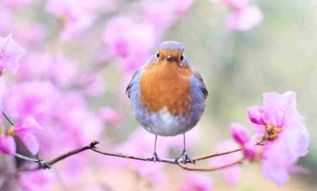 Mimpi Digigit Burung