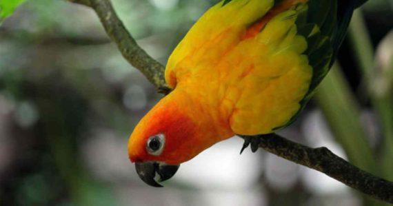 Mitos Tentang Burung