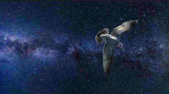 Mitos Kejatuhan Kotoran Burung